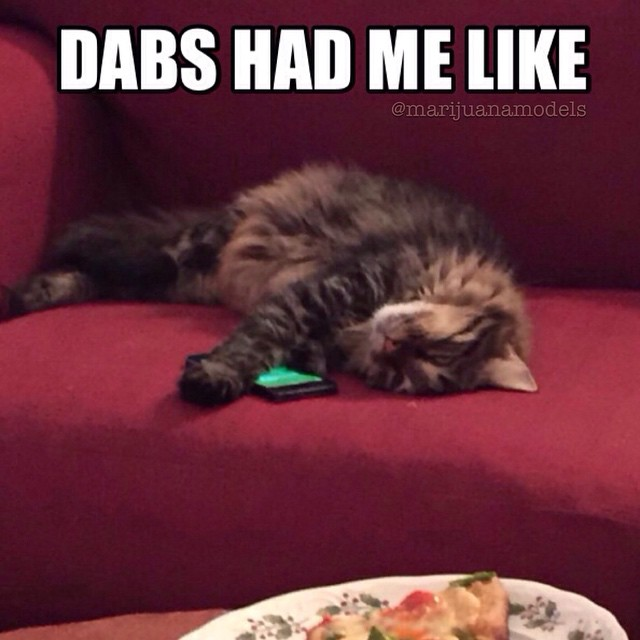 One too many dabs for our cat lmao. Stick to the KUSHnips kitty  @kushcommon @supadupajen @ht_potspock