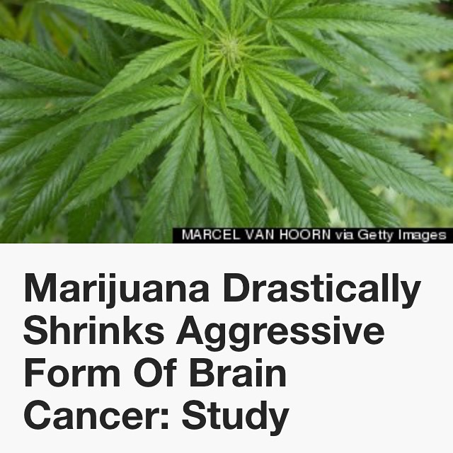 "To the man yesterday who told me I was irresponsible for posting ""stoner pseudoscience"" on MY profile and that cannabis alone doesn't kill cancer... F you! Your closed mindedness would mean no research into the effects this plant can have on disease. If cannabis helps JUST ONE PERSON then it is worth it. As stated in this article: ""Meanwhile, when used alone as a form of treatment, THC has been shown to reduce the size of other cancerous tumors and stop the spread of HIV, and CBD strains of marijuana have had a profound effect on children and adults who suffer from debilitating seizure disorders."""