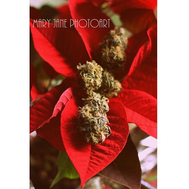 @maryjanephotoart Happy Holidaze