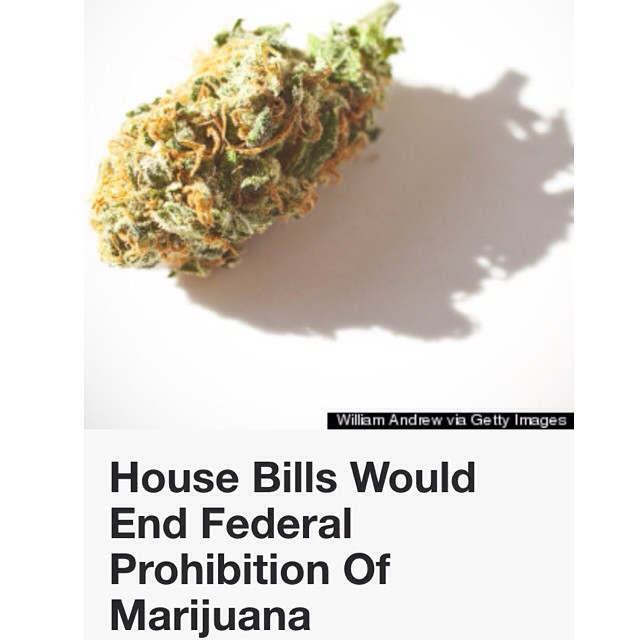 "This article was from a few days ago, but I wanted to share with you all anyways. ""Rep. Jared Polis (D-Colo.) introduced the Regulate Marijuana Like Alcohol Act, which would remove marijuana from the Controlled Substances Act's schedules, transfer oversight of the substance from the Drug Enforcement Administration over to the Bureau of Alcohol, Tobacco, Firearms and Explosives, and regulate marijuana in a way similar to how alcohol is currently regulated in the U.S."" Personally I think we should all be able to grow our own cannabis in our homes but getting cannabis away from the DEA is necessary too. As more states start legalizing we need to beware of ""big canna"" (think big pharma; not operating for the good of the people, fueled by money and greed, etc.) and the scary idea of GMO cannabis."