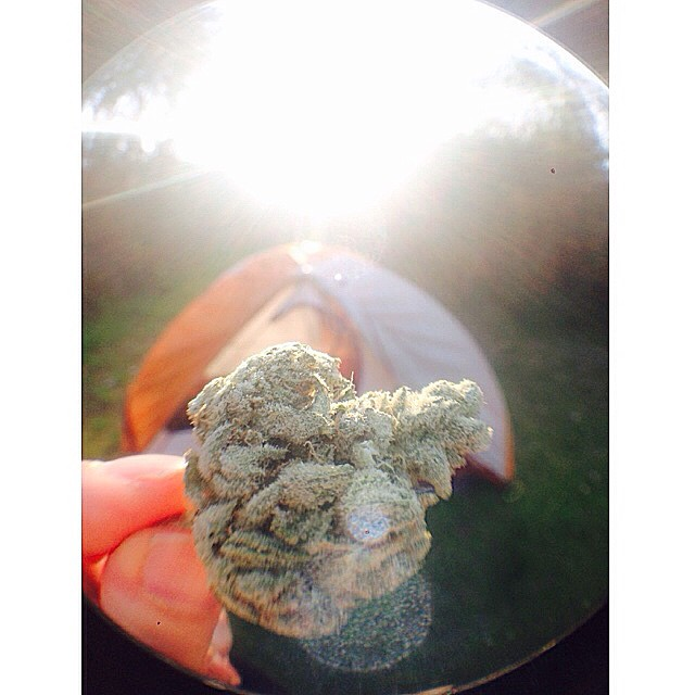 ️Good times camping this weekend with some super frosty gorilla glue Hope you guys had a chance to recharge and relax