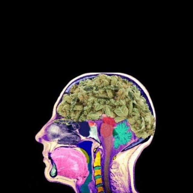 "Question authority.  Question the media.  Question history. Question your beliefs. Question ""reality."" You have a brain. A free-thinking mind. Please, use it! Cannabis prohibition is a big corrupt joke. If you're reading this, hopefully you know that and it makes you question the validity of everything else."