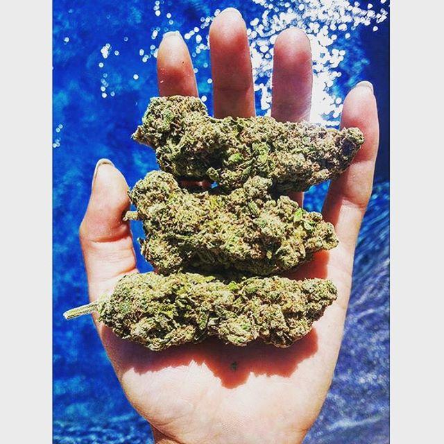 @marijuana_moonlady ️Summer😀
