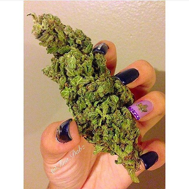 I'll be high for KUSHmas @tina.dabz @tina.dabz