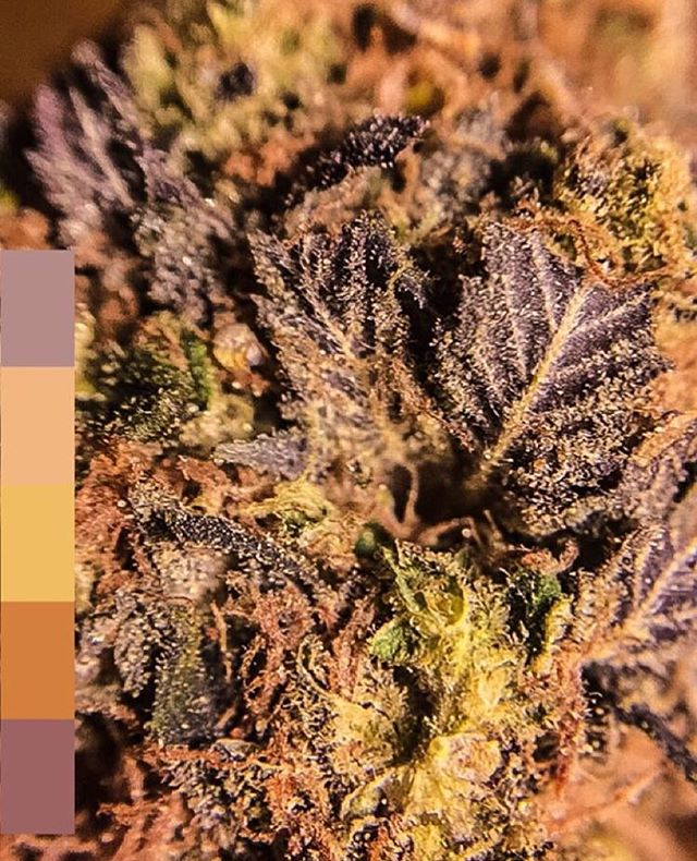 Weed Color Palette @mermaidmermaidd
