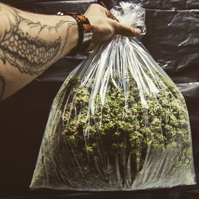 @forestrangermario 🌲️ Happiness in a bag