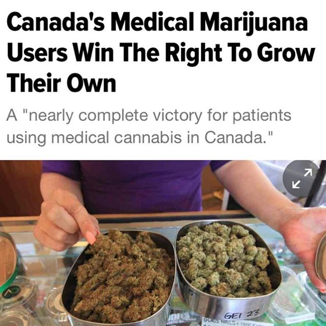 "And out of Canada this week: ""The citizens who challenged the ban said marijuana grown under the government system did not allow them to control the strains and dosages of their medical treatment."""