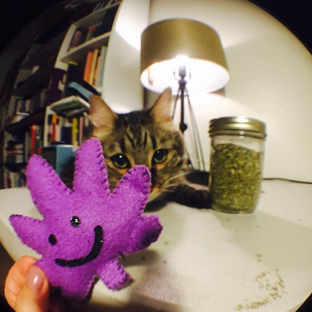 Making lots of KUSHnips tonight  Organic catnip toys for your favorite kitties! Available in a bunch of different colors in our shop accessory section️ Link in bio!