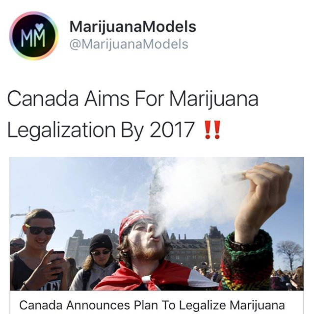 """Canada's Liberal government will introduce a law in spring 2017 to legalize recreational marijuana, fulfilling an election pledge from Canadian Prime Minister Justin Trudeau"""