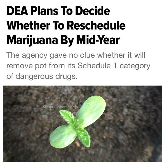 "/////The Drug Enforcement Administration plans to decide whether marijuana should reclassified under federal law in ""the first half of 2016,"" the agency said in a letter to senators.  DEA, responding to a 2015 letter from Sen. Elizabeth Warren (D-Mass.) and seven other Democratic senators urging the federal government to facilitate research into marijuana's medical benefits, doesn't indicate whether it will reclassify marijuana as less dangerous.  The U.S. has five categories, or schedules, classifying illegal drugs or chemicals that can be used to make them. Schedule I is reserved for drugs the DEA considers to have the highest potential for abuse and no ""current accepted medical use."" Marijuana has been classified as Schedule I for decades, along with heroin and LSD. Rescheduling marijuana wouldn't make it legal, but may ease restrictions on research and reduce penalties for marijuana offenses.//////"