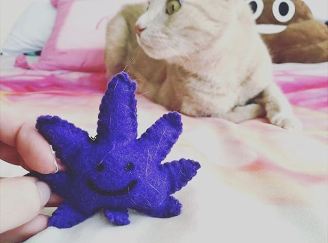 @miss___og kitty is nervous someone's comin for that KUSHnip! 📬 Available in our shop in a ton of different colors I hand sew each one and stuff em with organic catnip www.shop.kushcommon.com